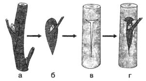 Биология Тест. Размножение растений