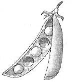 плоды 2