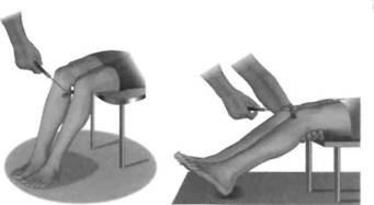 Биология 9 олимпиада коленный рефлекс