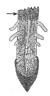 Биология Тест. Клеточное строение корня