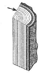 Биология Тест. Клеточное строение стебля