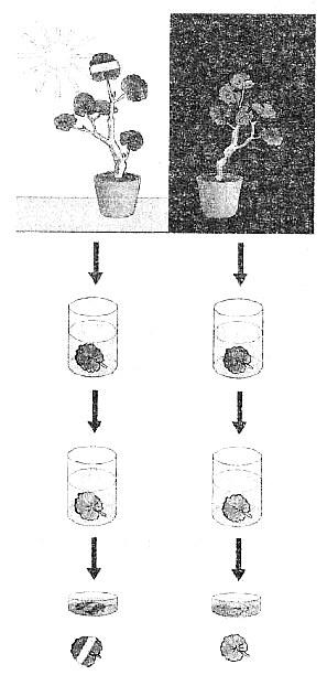 Биология Тест. Фотосинтез