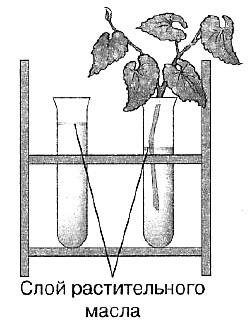 Биология Тест. Испарение воды растением. Листопад
