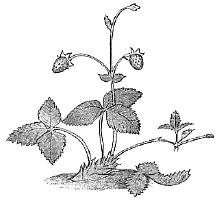 Биология Тест. Вегетативное размножение растений